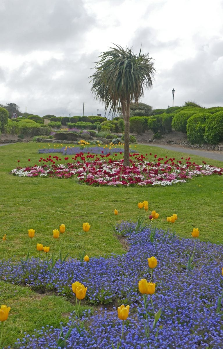 Spring bulbs flowering in St Annes seafront gardens, photo by Sue Massey