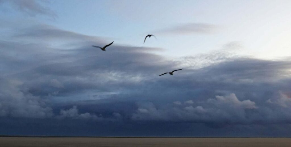Silhouette of gulls. Photo: Sue Massey