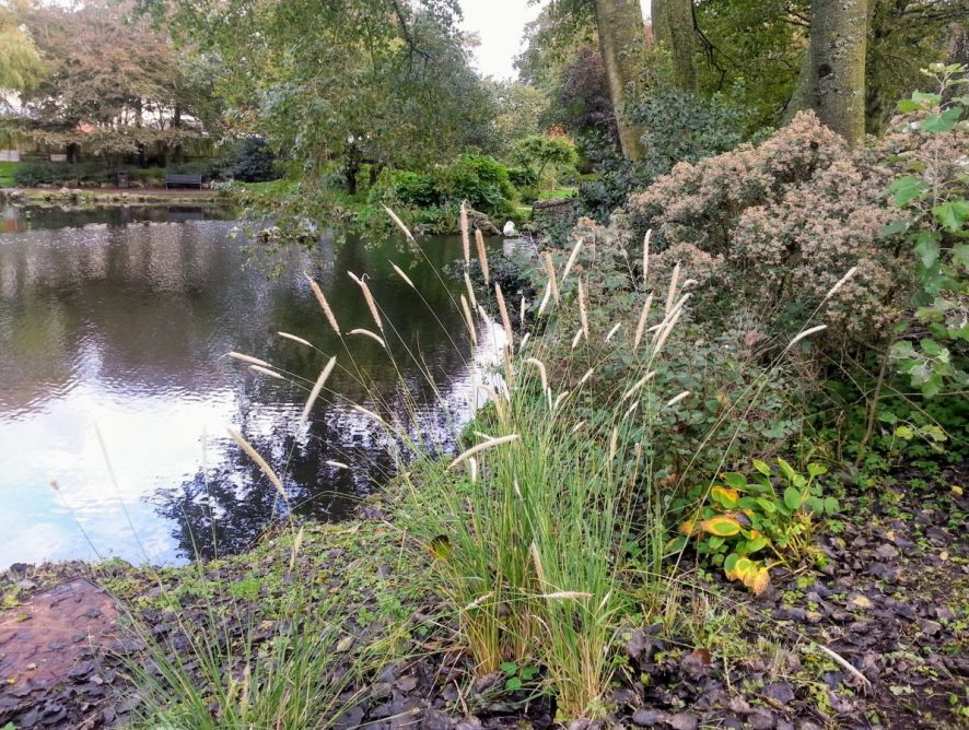 Ashton Gardens in Autumn. Photo: Shirley Donovan