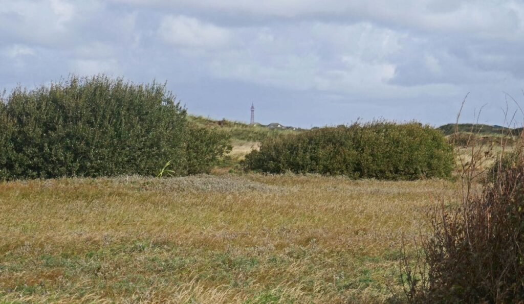 Looking across the overgrown slack at St Annes nature reserve, Blackpool Tower ahead. Photo: Sue Massey
